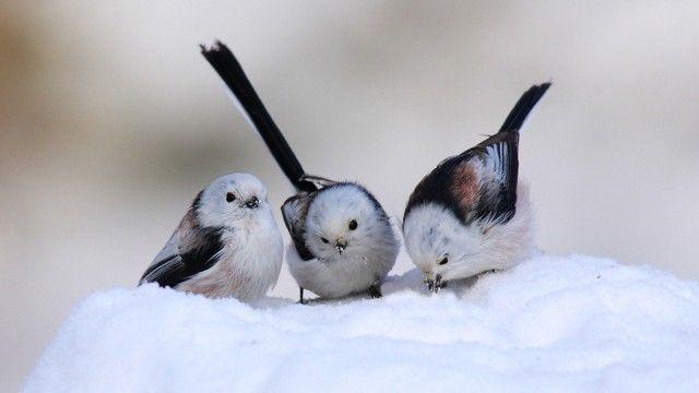 cute birds images - Cute Birds Wallpaper HD