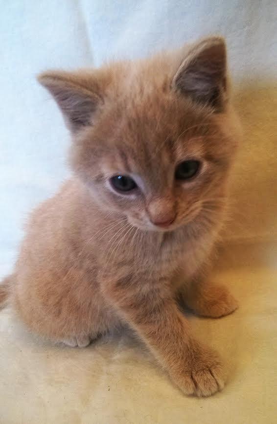 My Kitten Samwise Gamgee Kittens Animals Cats