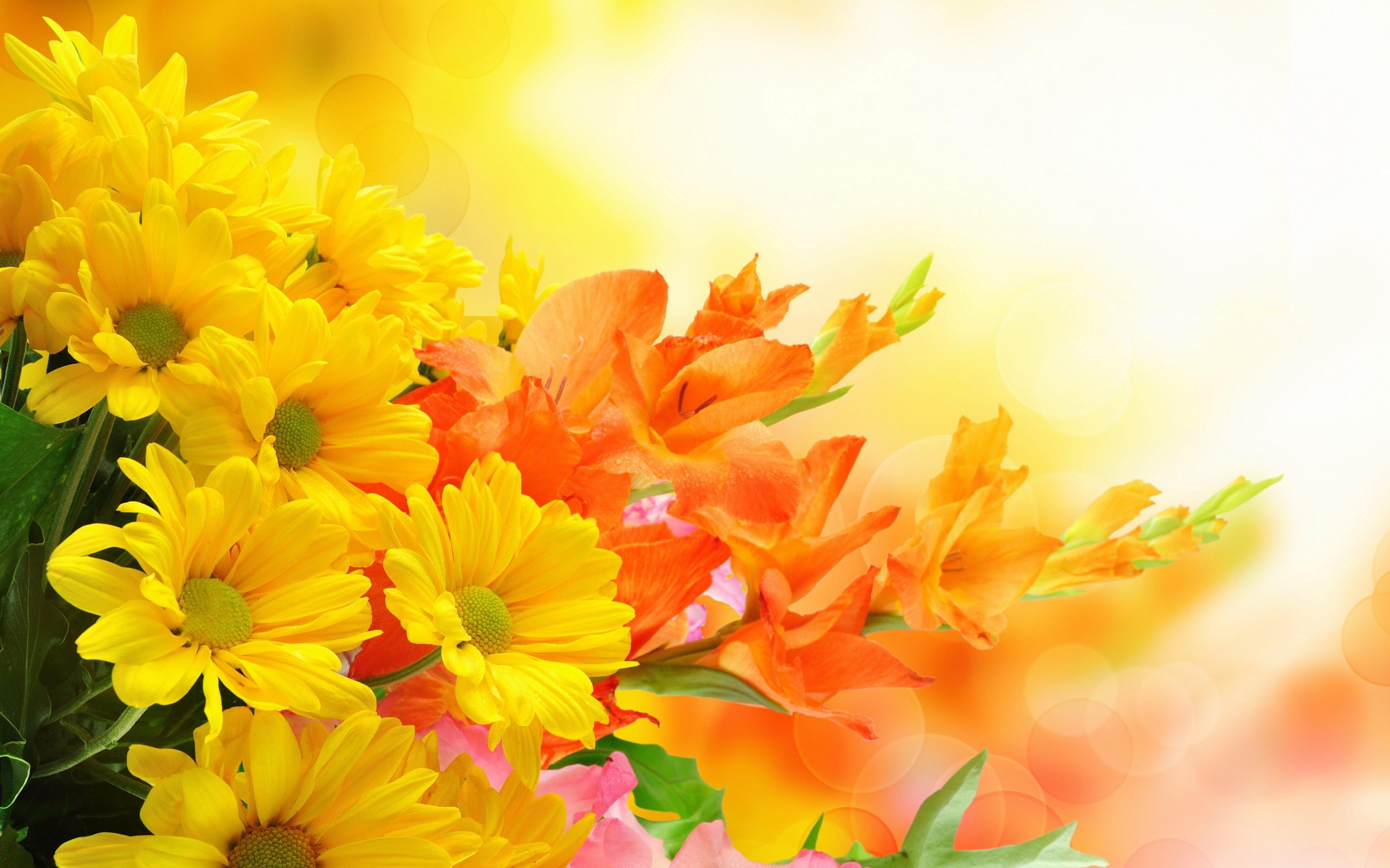 Yellow Flowers Wallpapers High Quality Resolution Is 4K
