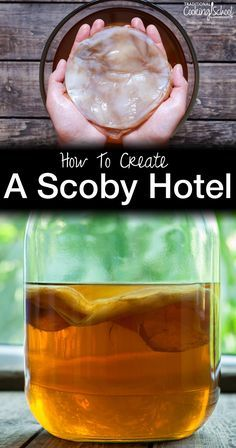 How To Create A Scoby Hotel With Images Kombucha Recipe Kombucha Scoby Scoby Hotel
