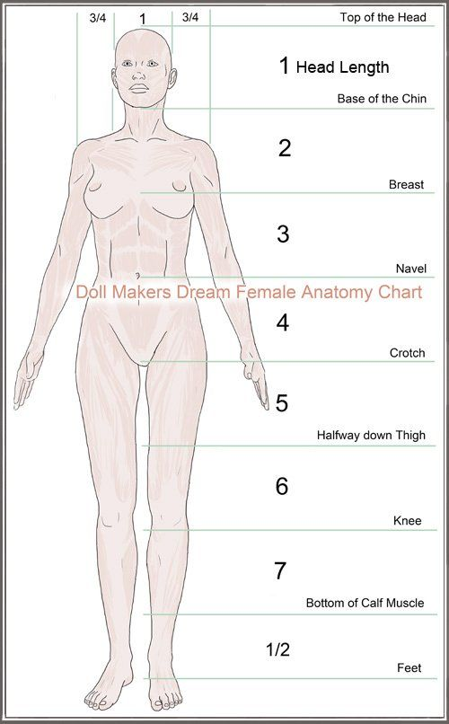 The female anatomy for artists   Dolls and Creatures   Pinterest ...