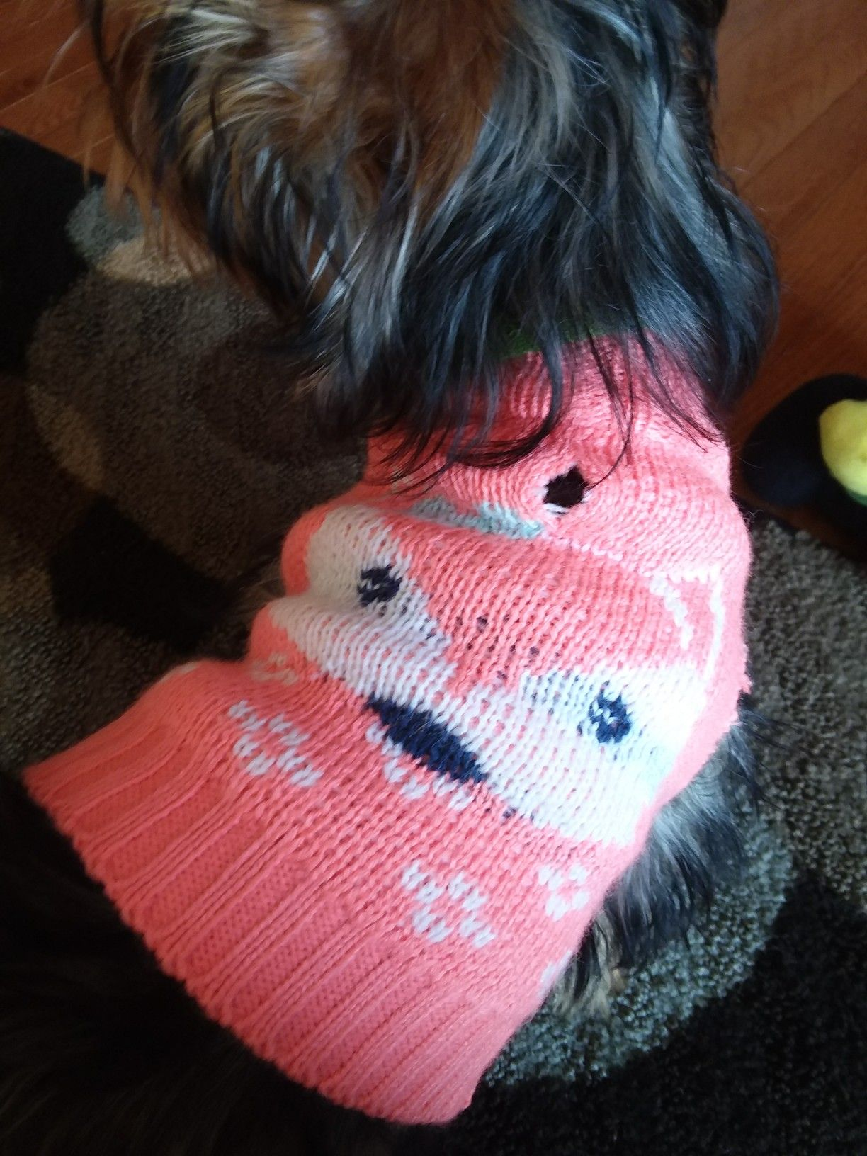 I got a fancy sweater from Walmart. Beat that world!