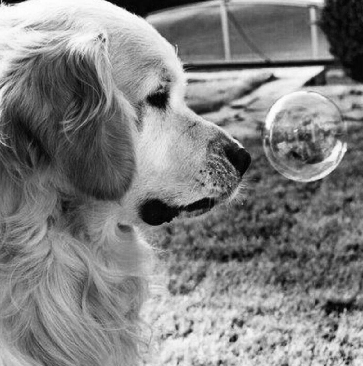 Bubble~♛