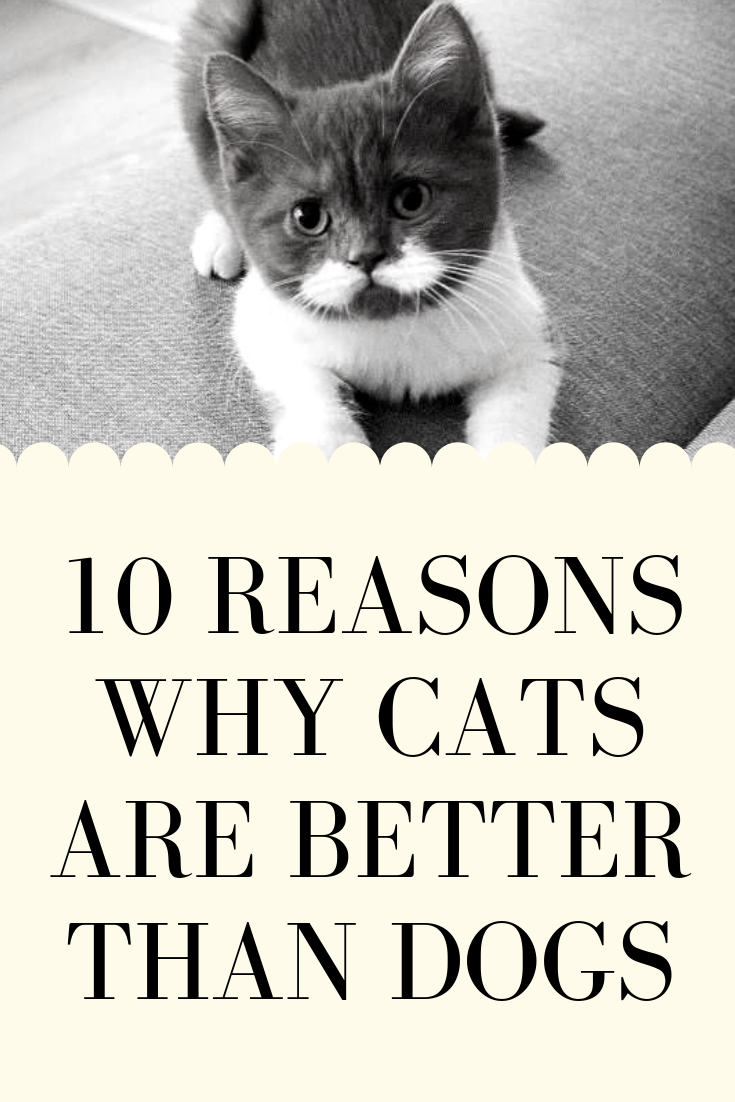 10 Reasons Why Cats are Better Than Dogs Funny cats