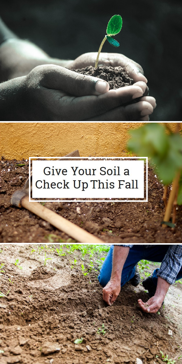 Soil testing is quick, easy, and can save you money. Find ...