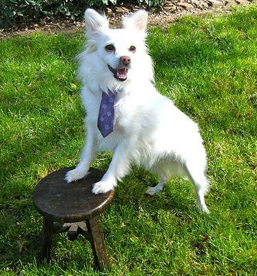 A dog tie