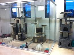 Image result for CAT GLASS PARTITION DISPLAY HOME Cat