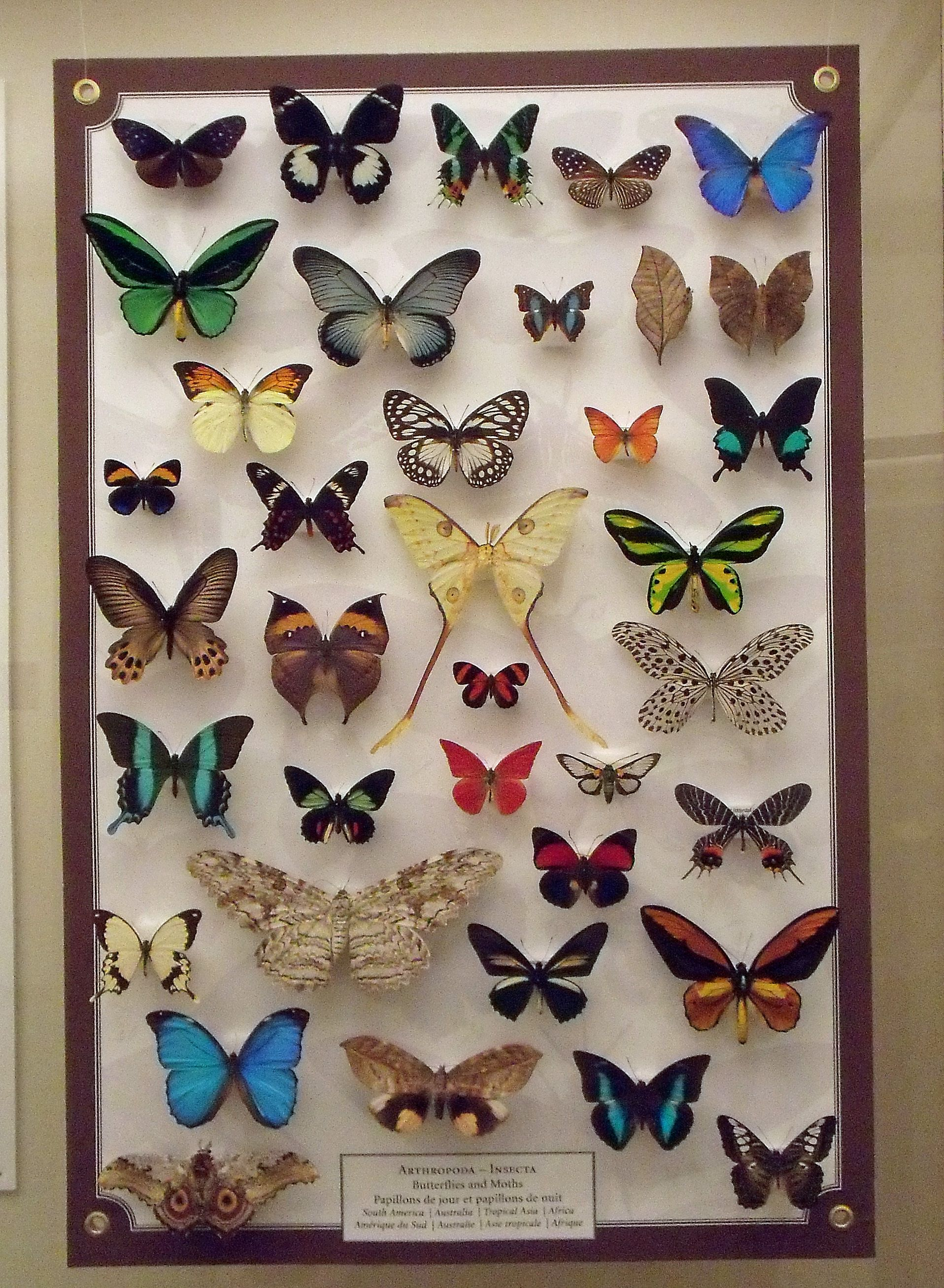 Butterflies butterfly collection collections butterfly