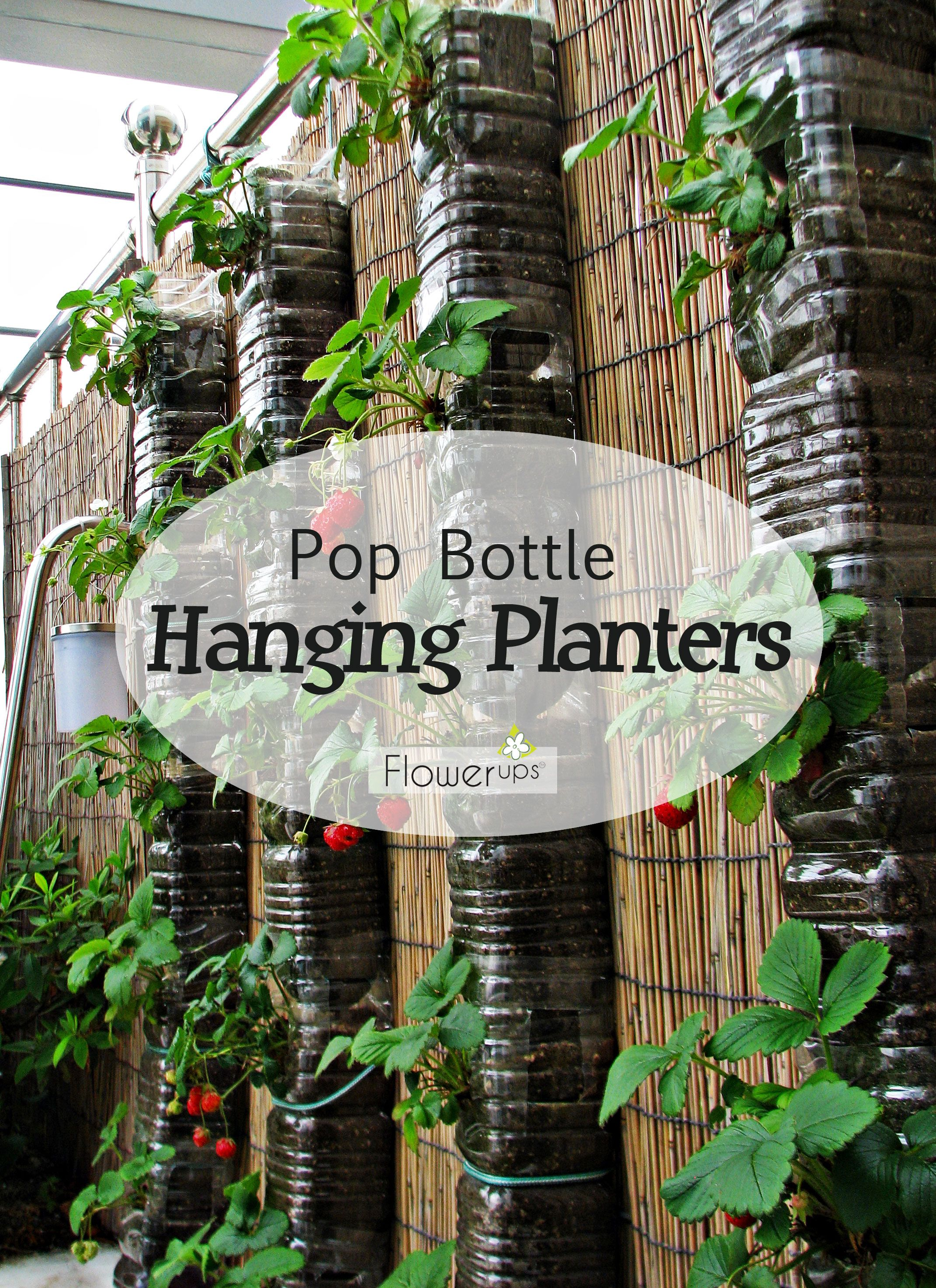 Diy Hanging Planters With Pop Bottles Tutorial