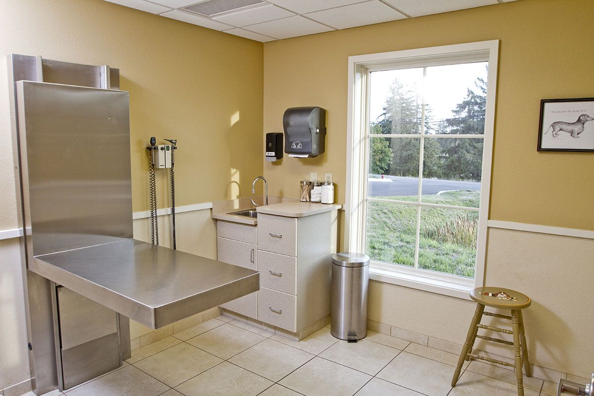 Veterinary Exam Room Hospital Design Veterinary Hospital Pet
