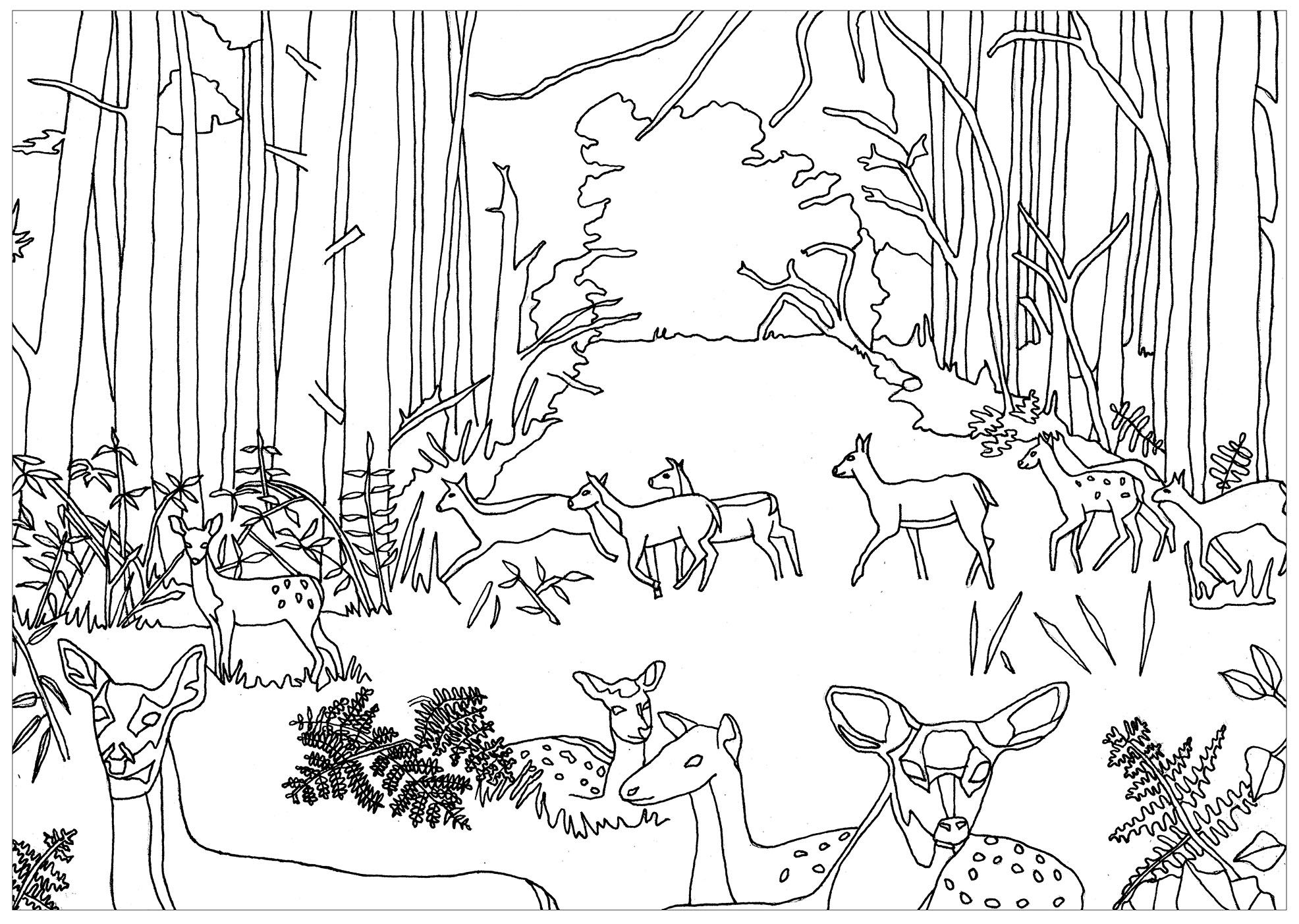 free coloring page coloring does and fawns in forest by