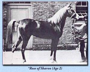 *Rose of Sharon  .   *Rose of Sharon, imported as an aged mare to the United States by Spencer Borden, is the line foundress of a remarkable world-wide dynasty and is, without question, one of the greatest mares ever imported to the United States.