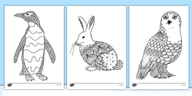 Arctic Animals Mindfulness Colouring Sheets Twinkl