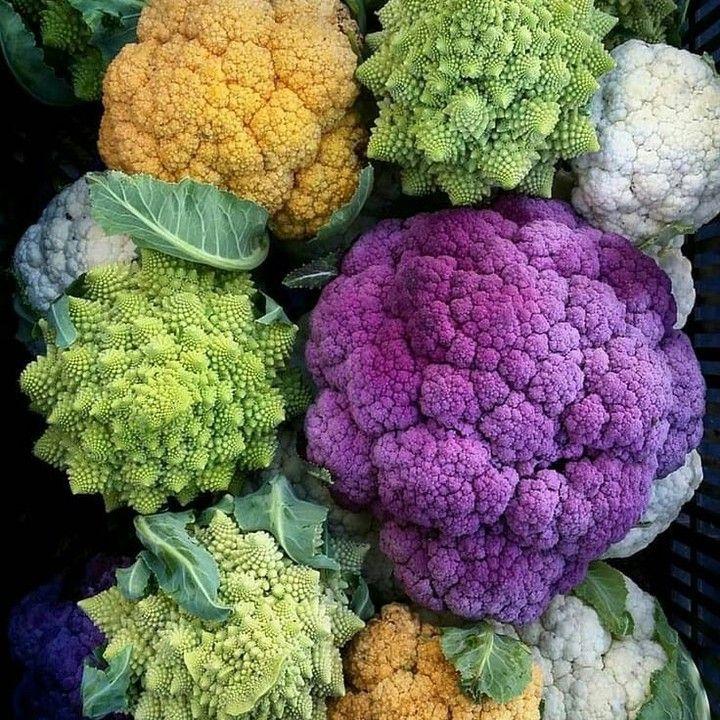 Garden colors 😍 - Repost from @horta_em_casa_oficial - - - - - - - - - - -