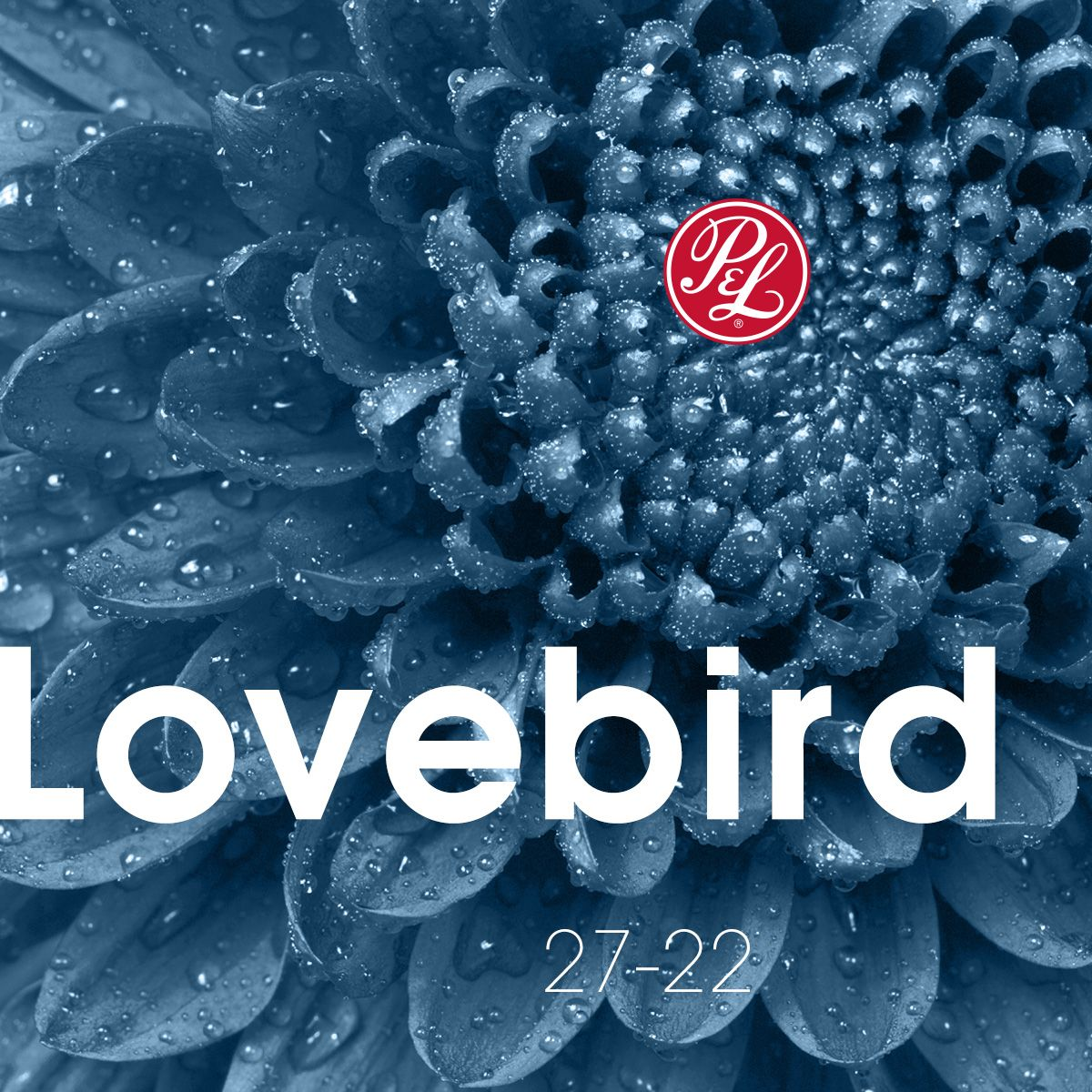 Lovebird's gray-blue hue echoes dependability, loyalty and calmness, imbuing rooms with a sense of harmony.