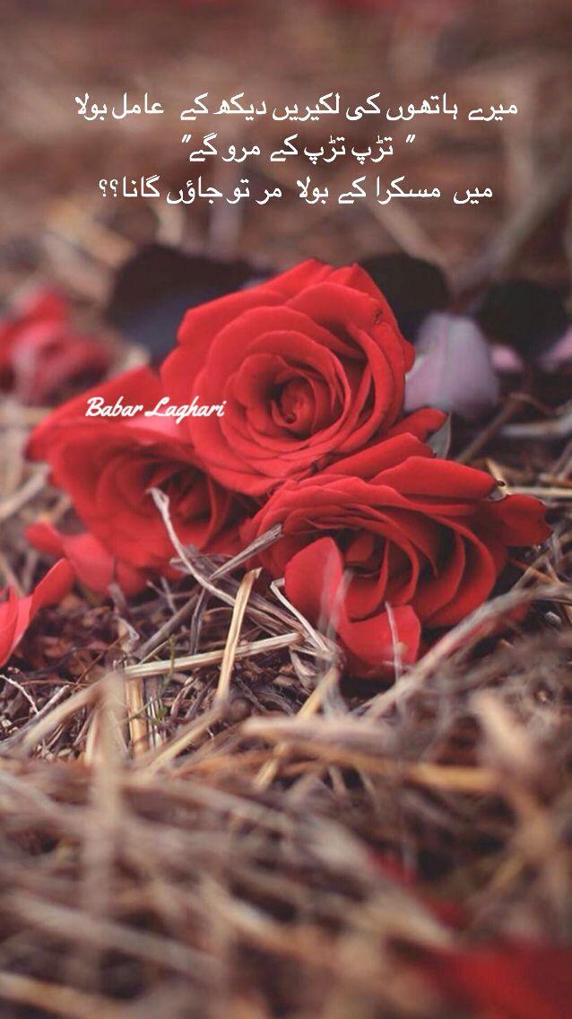 مر تو جائو گا نہ In 2020 Beautiful Flowers Wallpapers Flower Wallpaper Rose Wallpaper