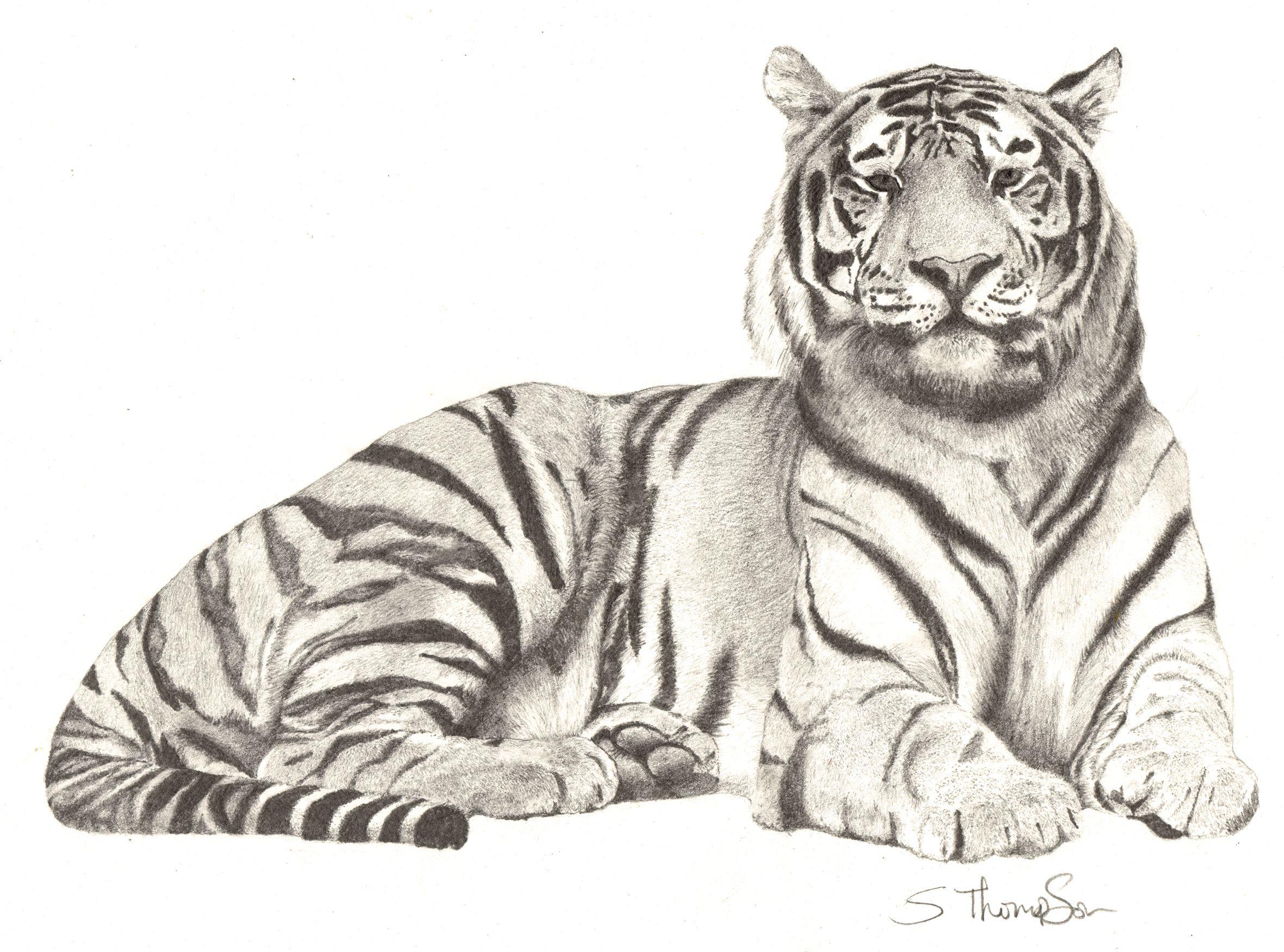 Анимация, картинки от тигра для рисования