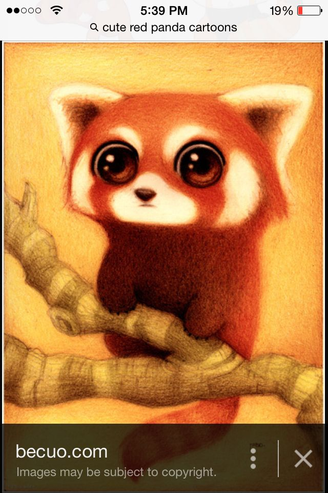 Red pandas rule the world. :-)