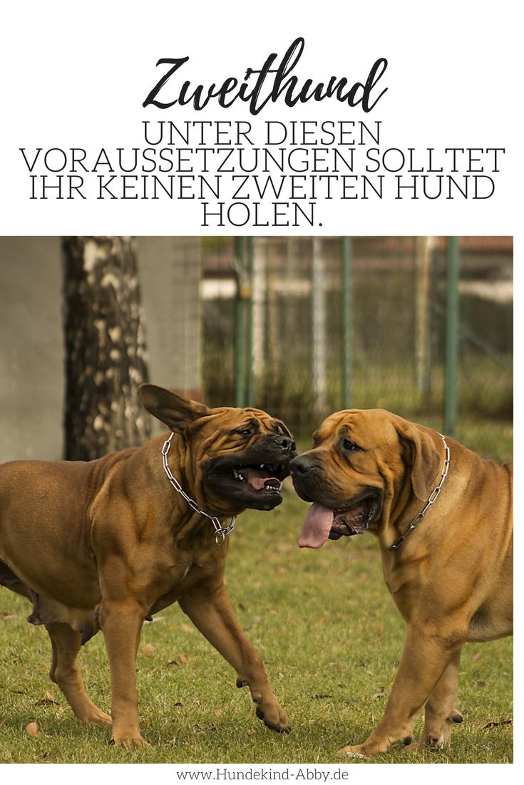 Warum Es Bei Uns Doch Keinen Zweithund Geben Wird Hunde Hundchen Training Und Hunde Und Kinder