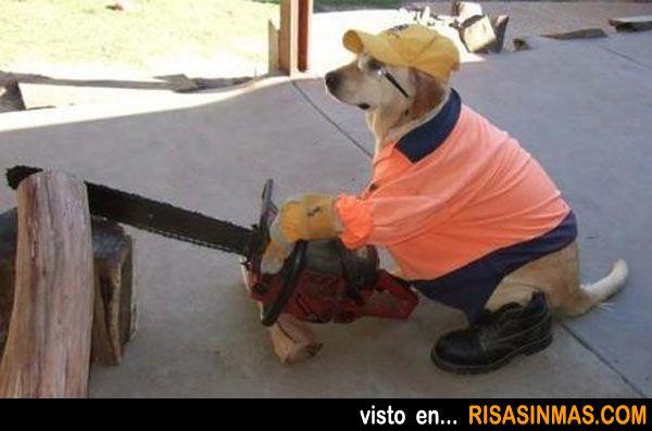 Perro Trabajando Cortando Madera Funny Dog Pictures Funny Animals