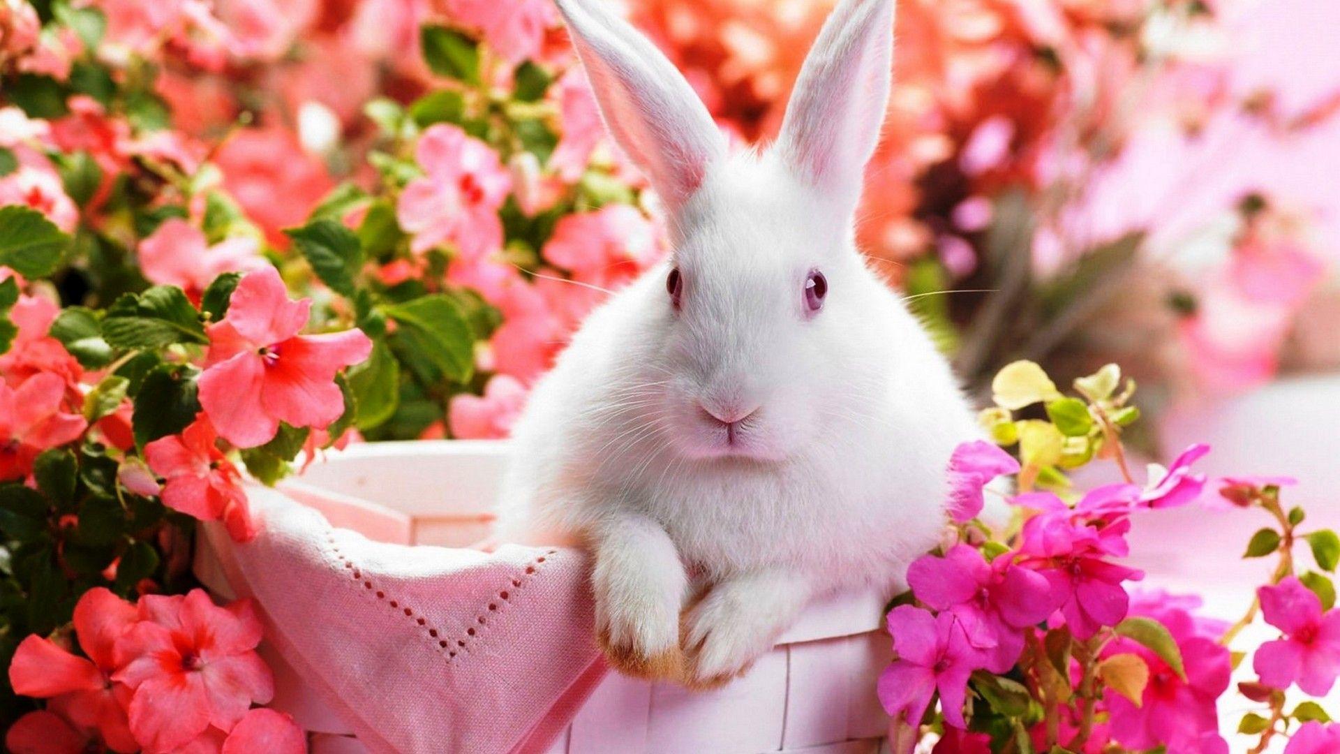 Cute Rabbit Wallpaper HD Rabbit wallpaper, Easter