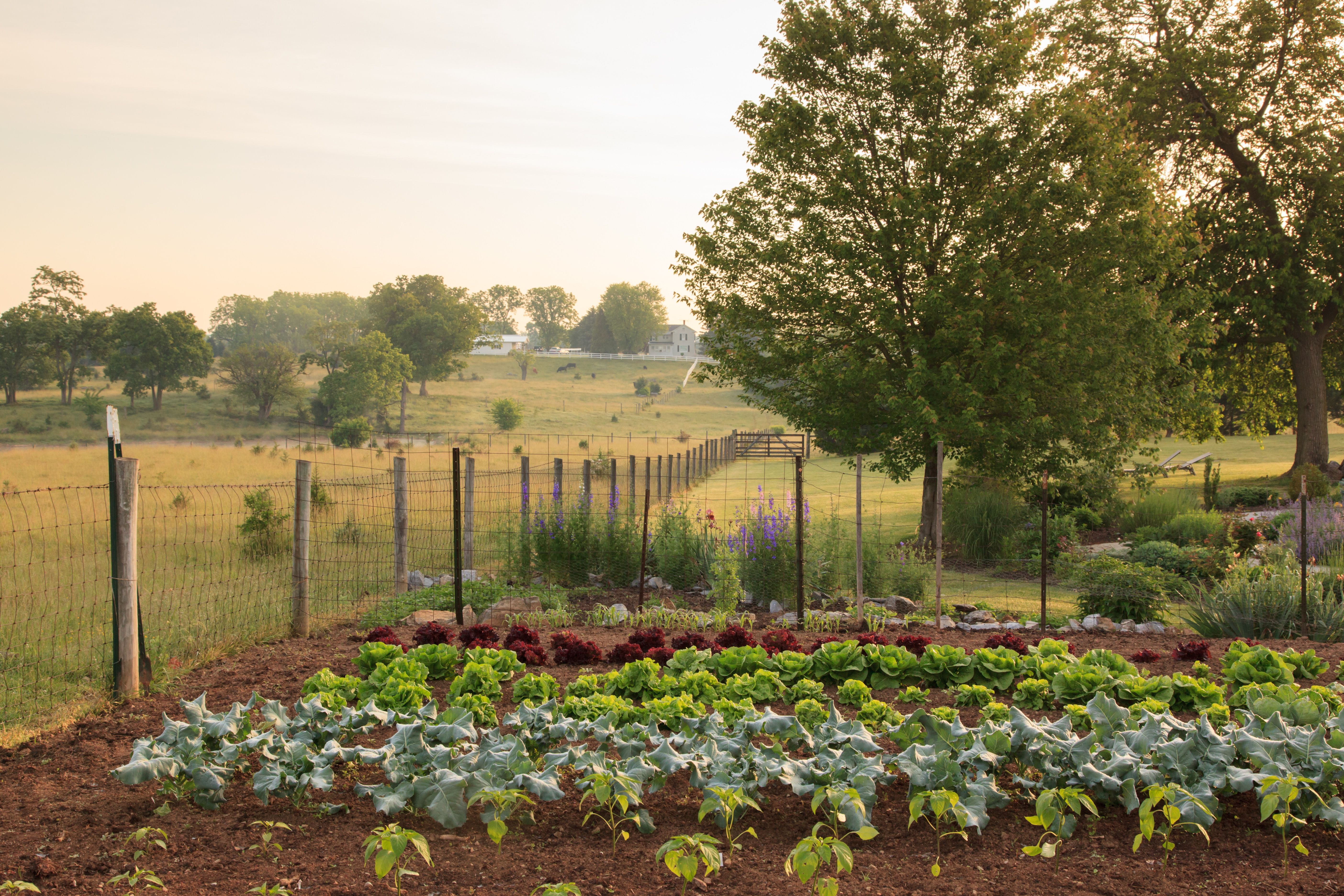 Chef\'s Garden at L\'Auberge   The Chef\'s Table   Pinterest   Virginia ...