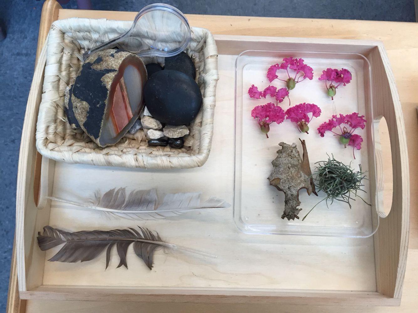 Nature Exploration Tray For Science Shelf Montessori