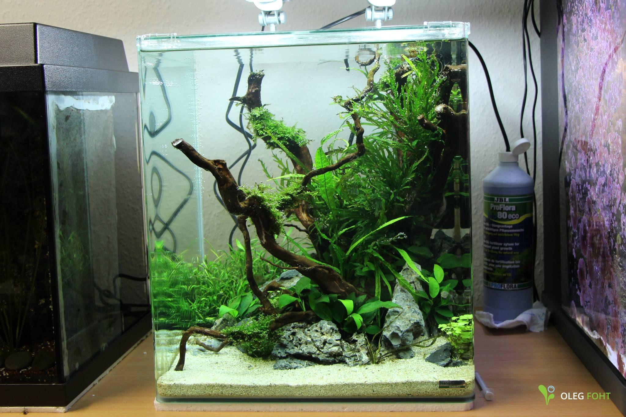 Low Tech Aquarium - Betta Fish Tank - Pinterest -