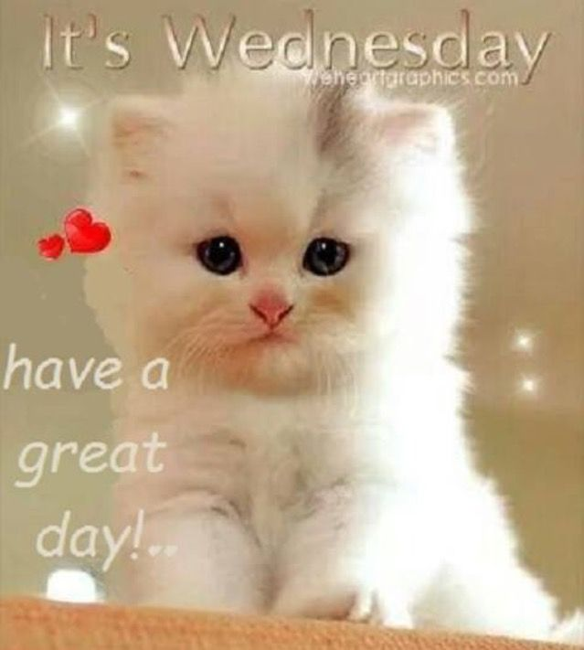 Image result for care2 comments have a great Wednesday