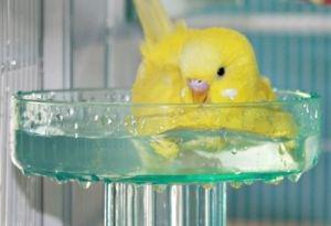 bird bath by Emilie Q