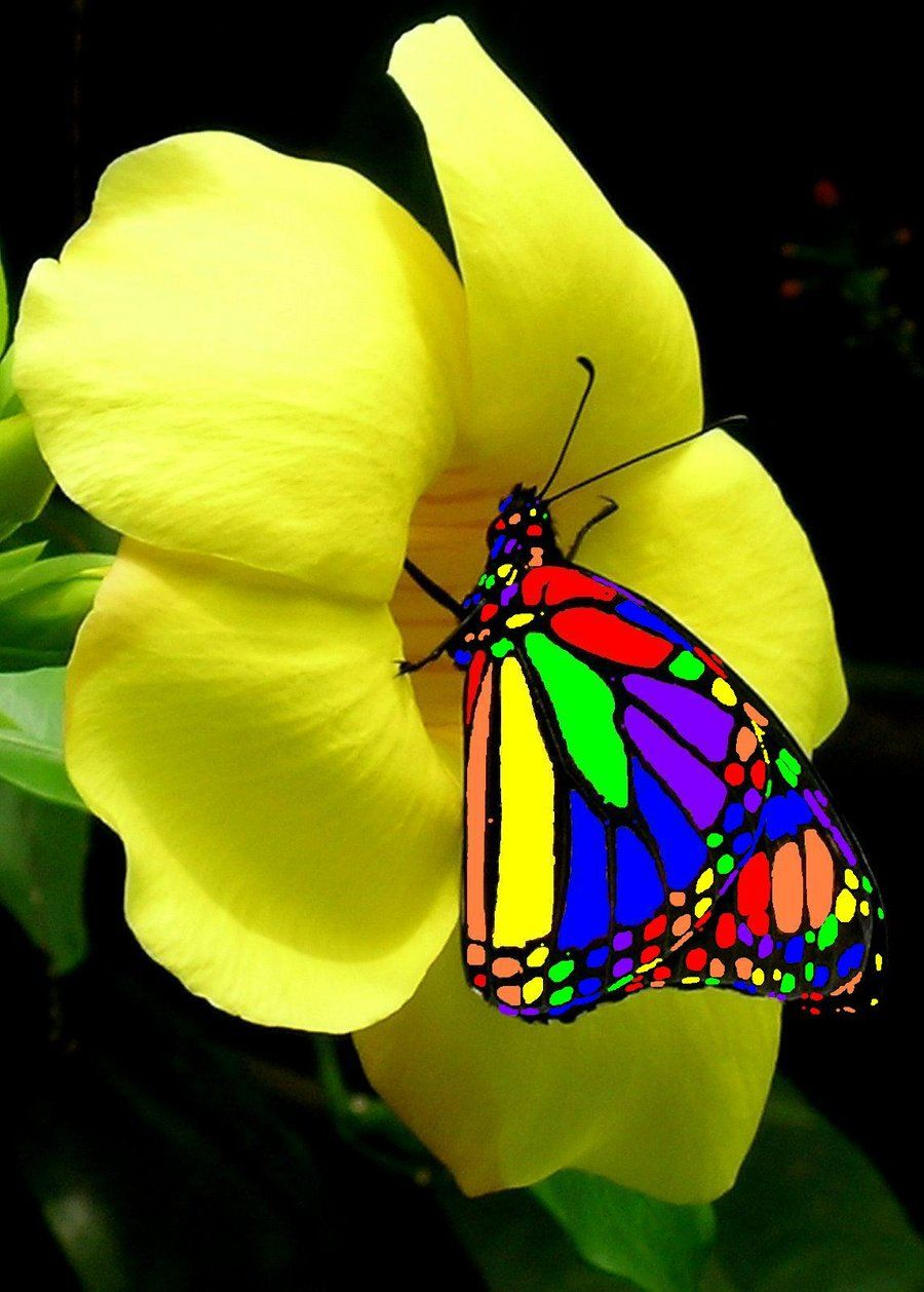 butterfly on yellow color - photo #23
