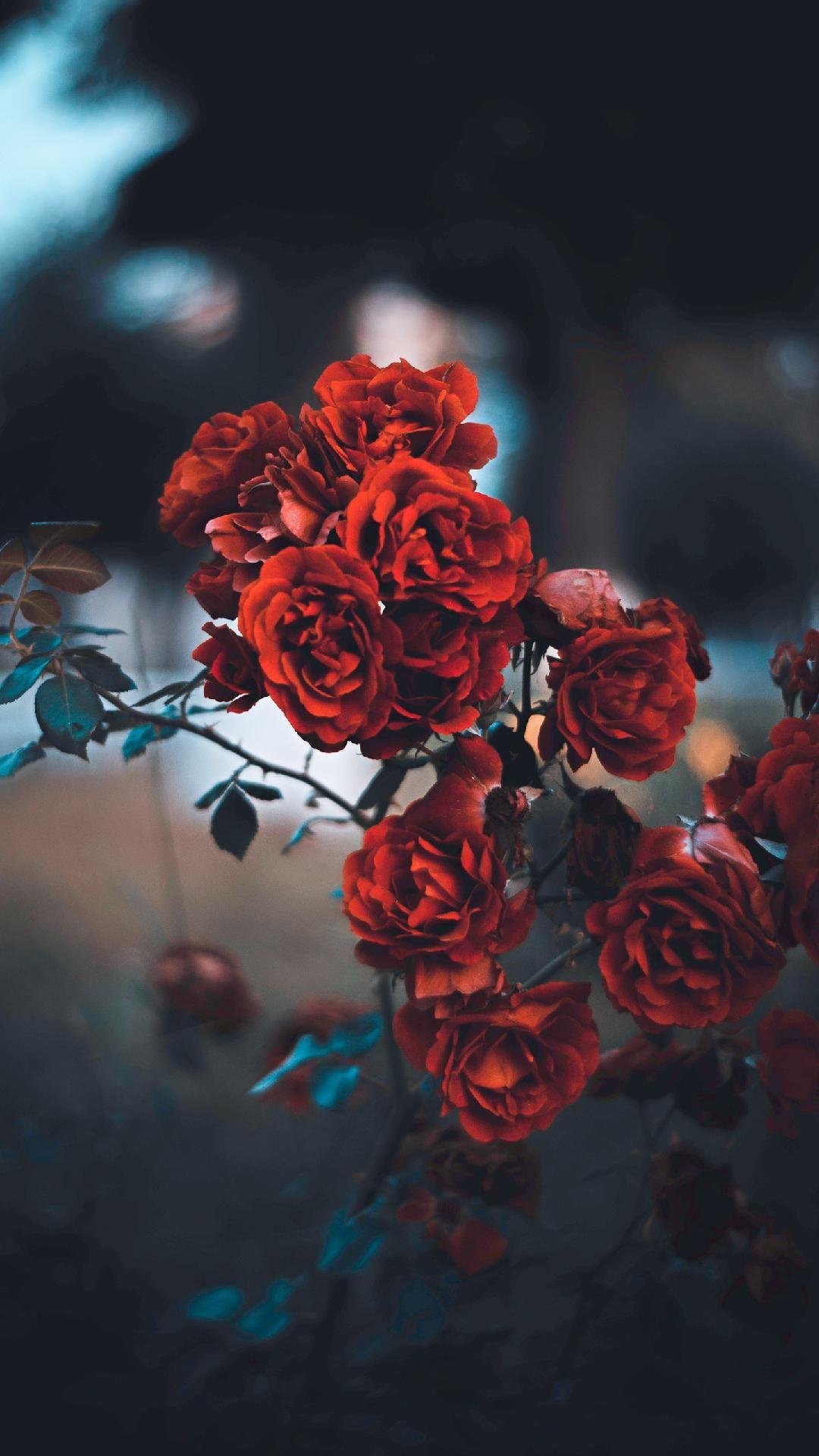 Yeah forever 😝 Flower iphone wallpaper, Flower