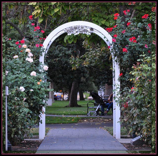 World Peace Rose Garden Capitol Park Sacramento Ca Peace Rose