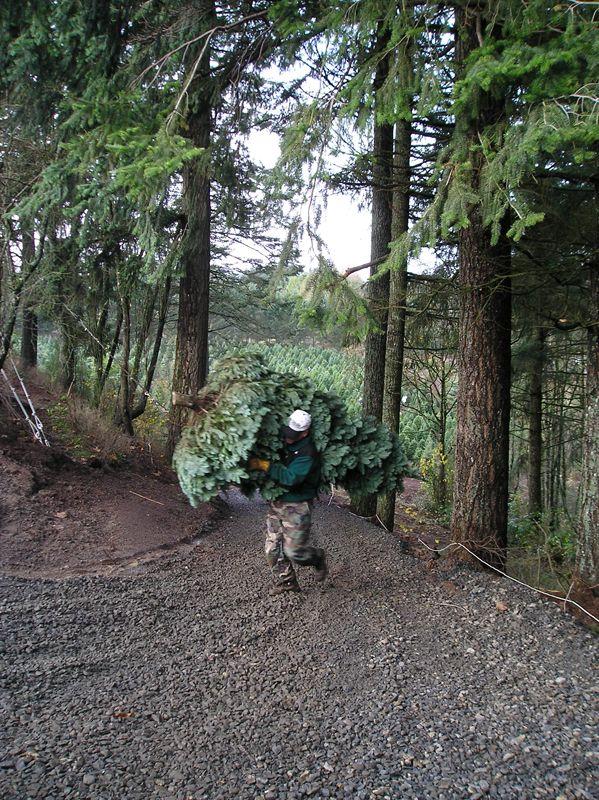 Helvetia Christmas Tree Farms, Inc. Hillsboro Oregon - Photos ...