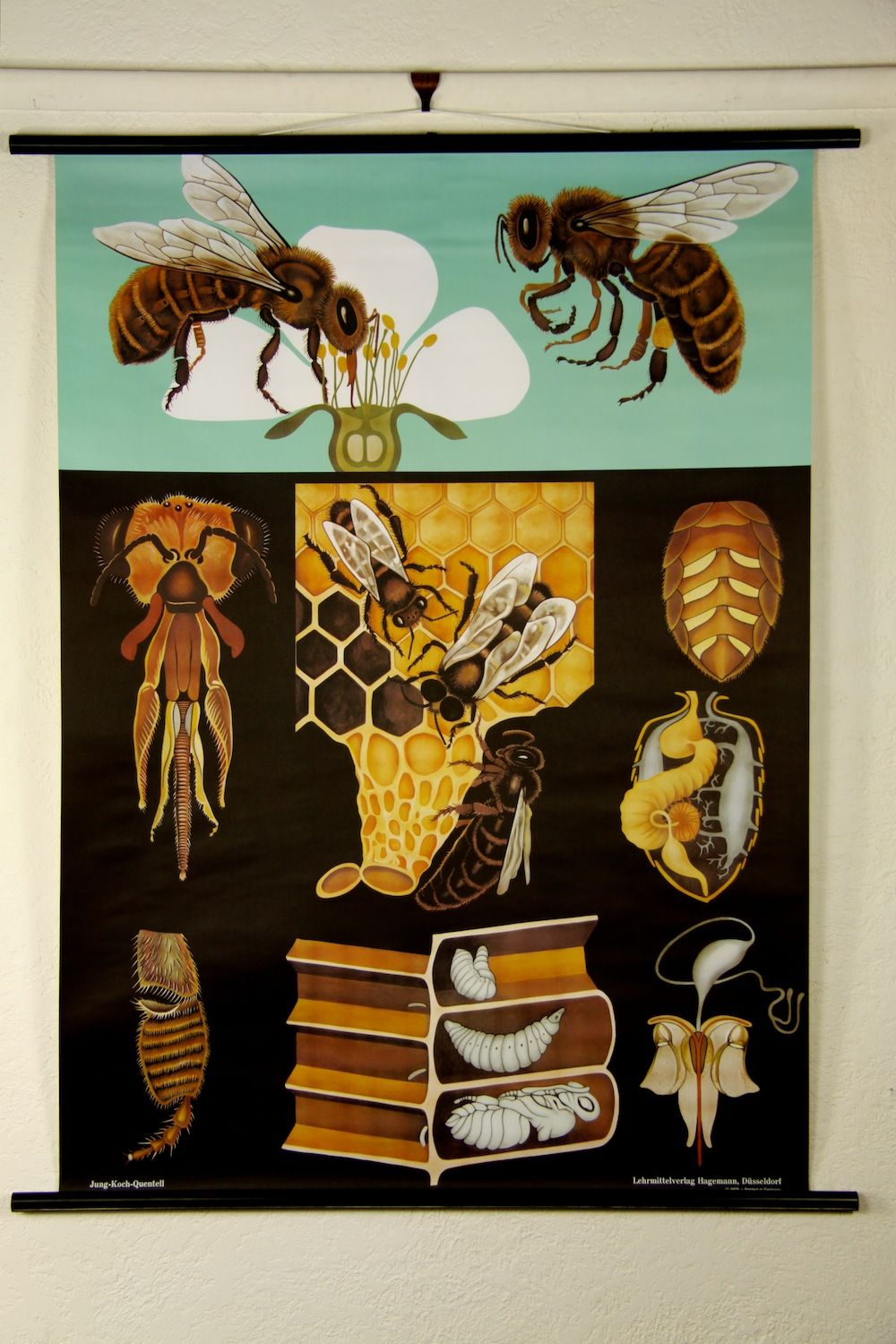 Zoology poster design - Find This Pin And More On Ecology And Nature Honey Bee Zoological Wall Chart Design