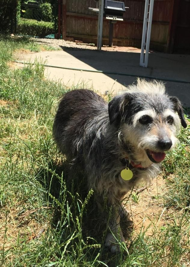 Adopt Pepper on Dog adoption, Terrier mix dogs, Dogs