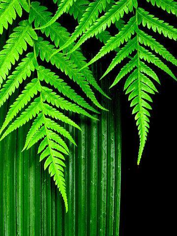 Green CompositionCanon Powershot SX 10 IS1/10 secf5.00.0 EV47.5 mmISO 80