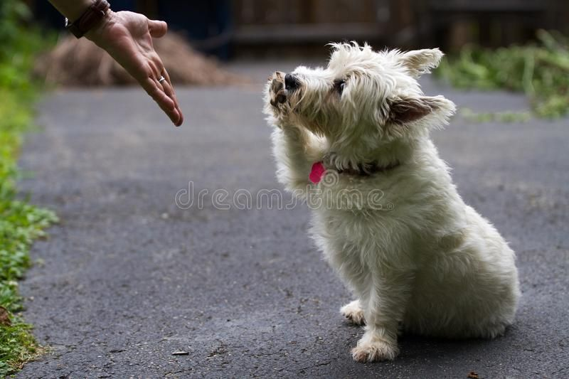 Puppy Shaking Hands Dog Canine Adorable Ad Hands Shaking