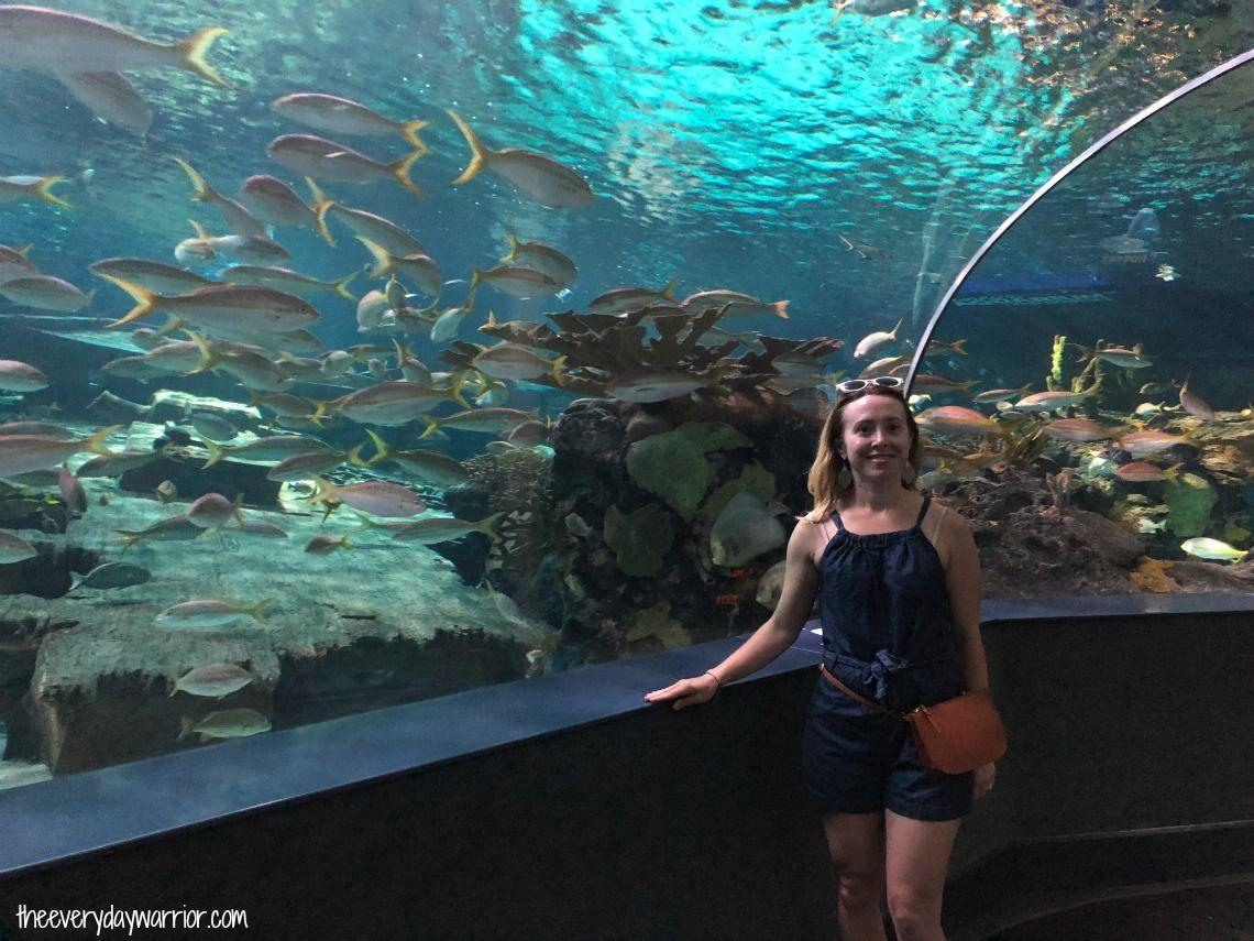 Ripley's Aquarium of the Smokies   Ripley aquarium ...