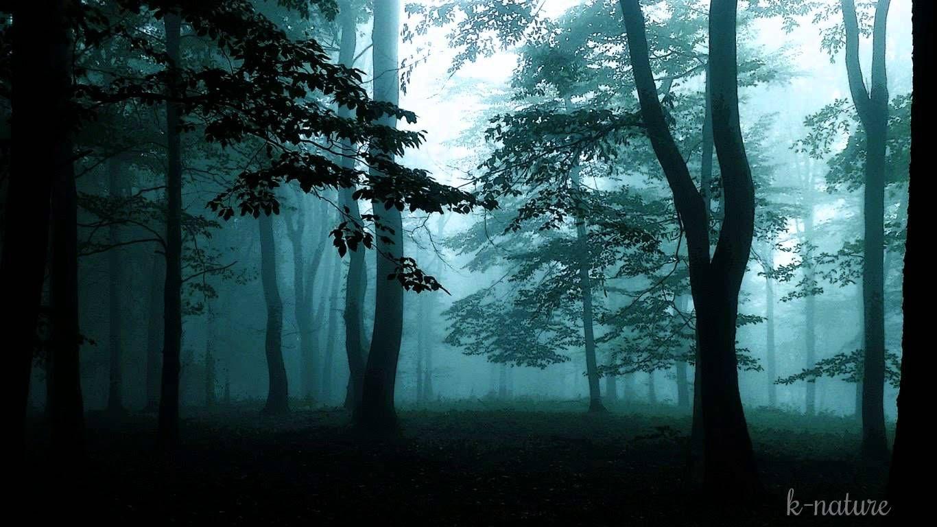 bruits de la nuit grillons pluie vent dans les branches hiboux et musique relaxation. Black Bedroom Furniture Sets. Home Design Ideas