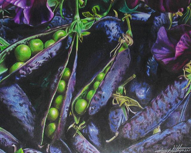 Peas - Coloured Pencil Drawing