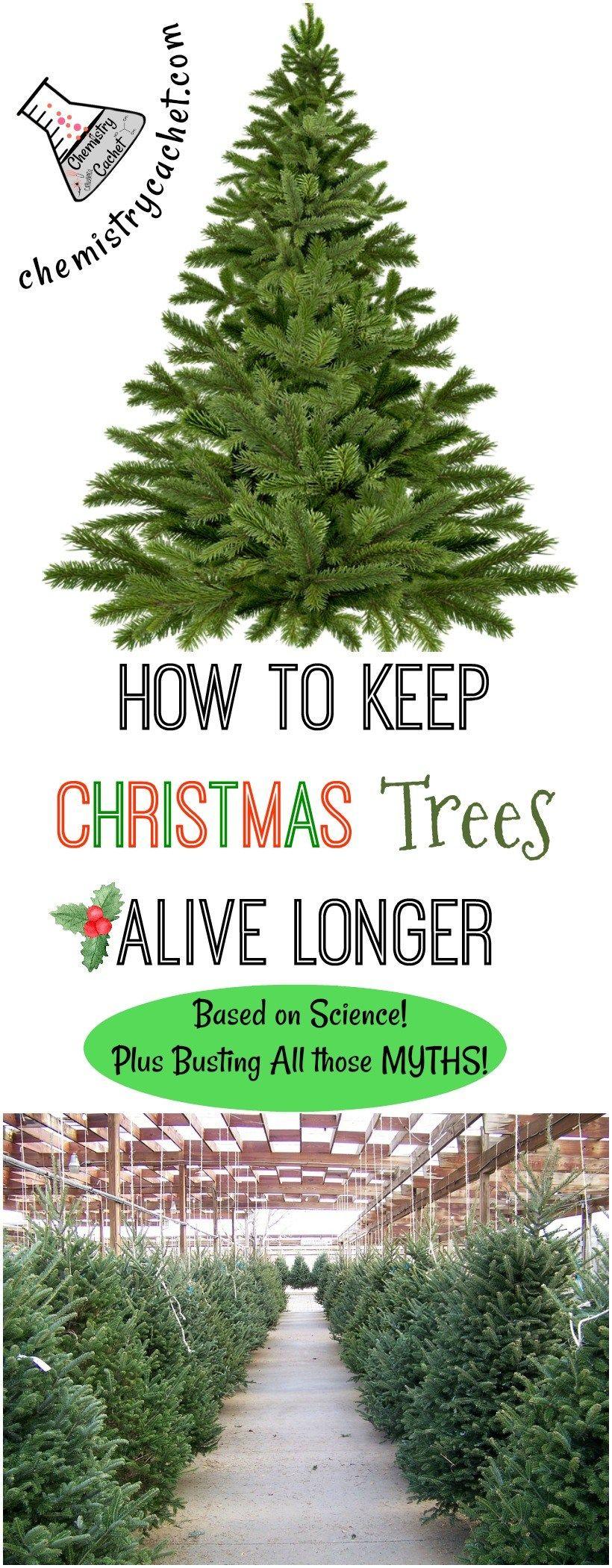 How To Keep Christmas Trees Alive Longer Based On Science Christmas Tree Care Christmas Tree Water Real Christmas Tree