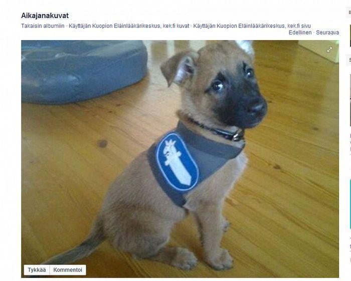 Pieni Poliisikoira Valde Sulattaa Suomalaisten Sydamia Facebookissa Koiranpennut Koiranpentu Koira