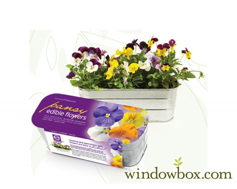 Edible Flower Kit Pansy Edible Flowers Plant Gifts Pansies