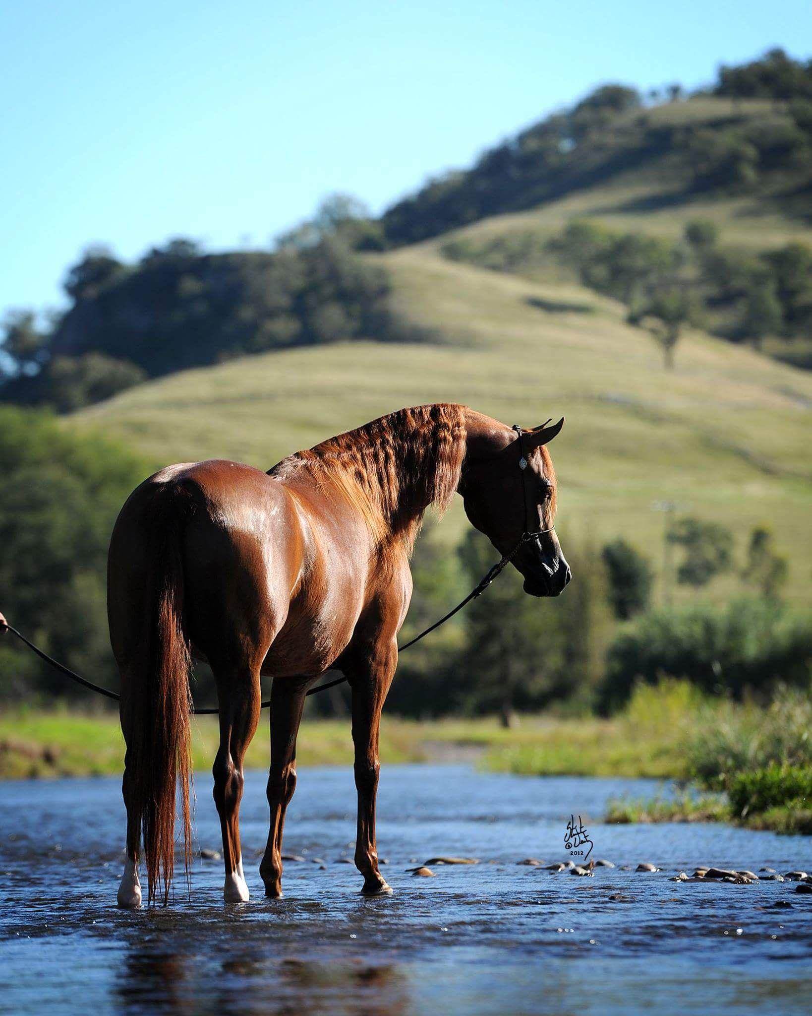 девушкой дикая лошадь картинка живое исполнение