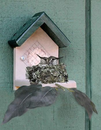 I Need To Order This For The Yard I Have The Feeders And About 10 Hummers Now I Need A Place For Them To Nest Hummingbird House Bird House Bird House Kits