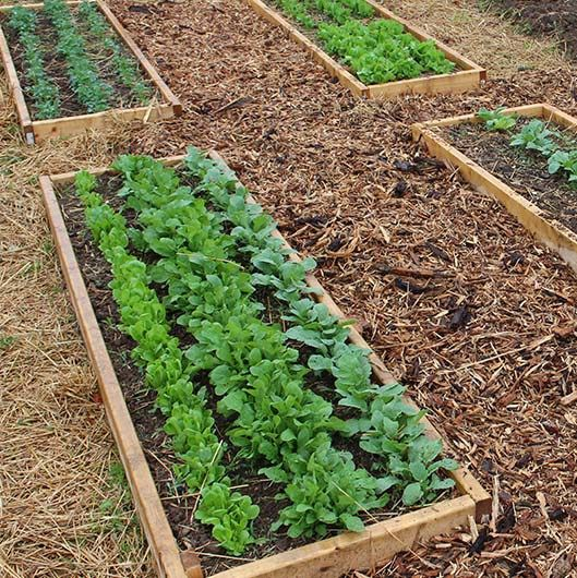Spring Crops Are A Great Way To Start Gardening Now! Check Out These Cool