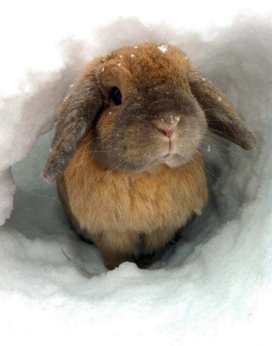 Pin Von Myla Amparano Auf Winter Wald Susseste Haustiere Susse Tiere Kleine Tiere