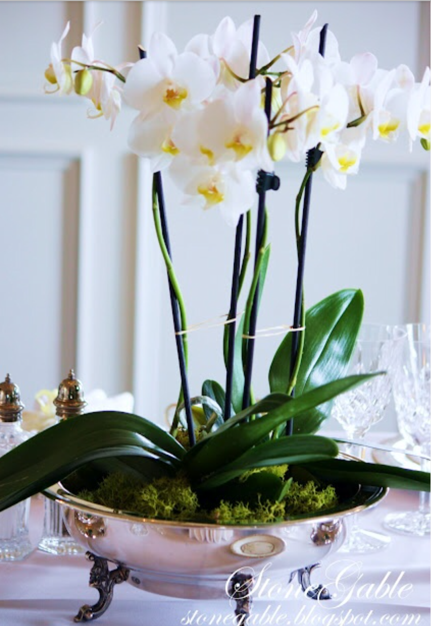 Potted orchid ideas m p pinterest flowers flower arrangements and flower - How to care for potted orchids ...