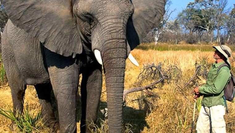 Okavango 15 Tage Wunderwelten-Reise. Elefant (© Peter Pack, Packsafari / Chamäleon)